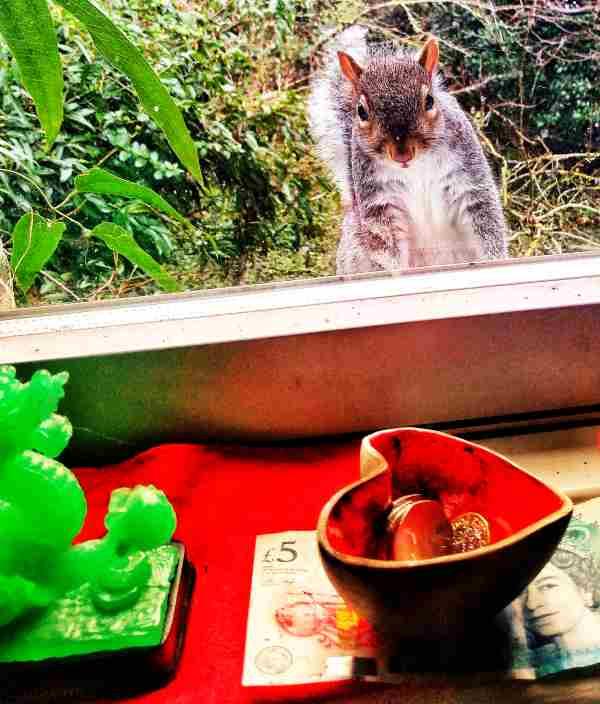 Photo of squirrel