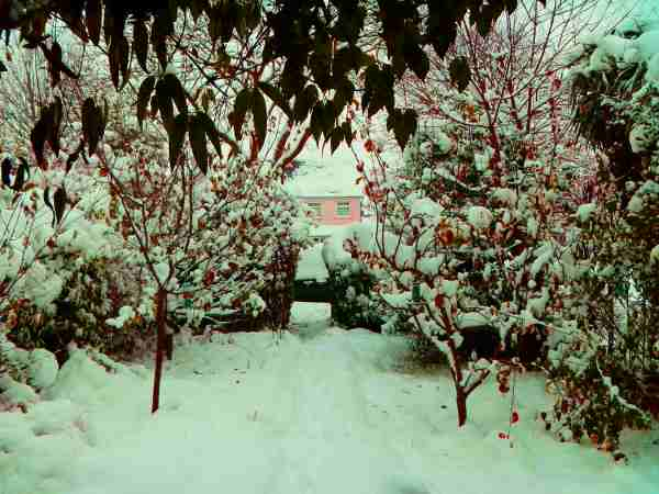 Photo of garden with snow