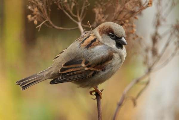 Photo of sparrow