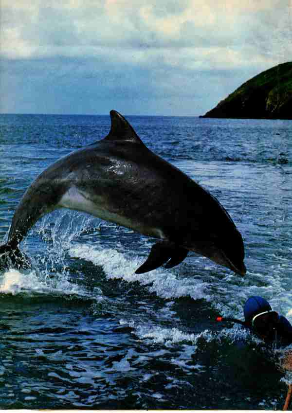 Photo of dolphin and swimmer